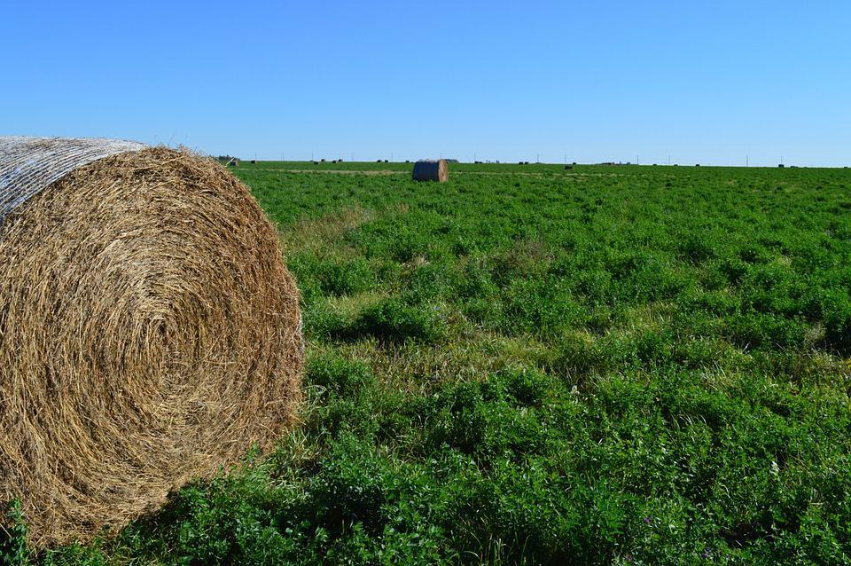 Average hay bale price